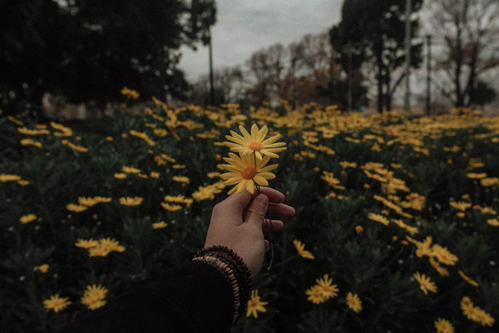 Mão branca segurando flores amarelas.
