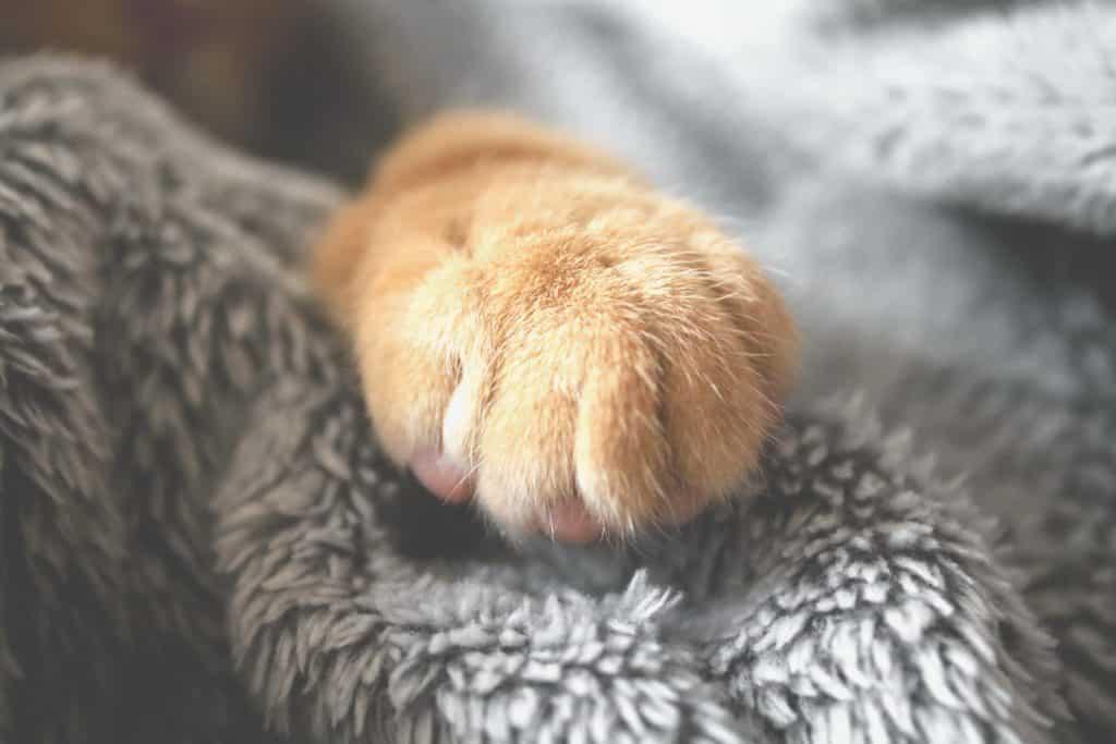 Pata de um gato