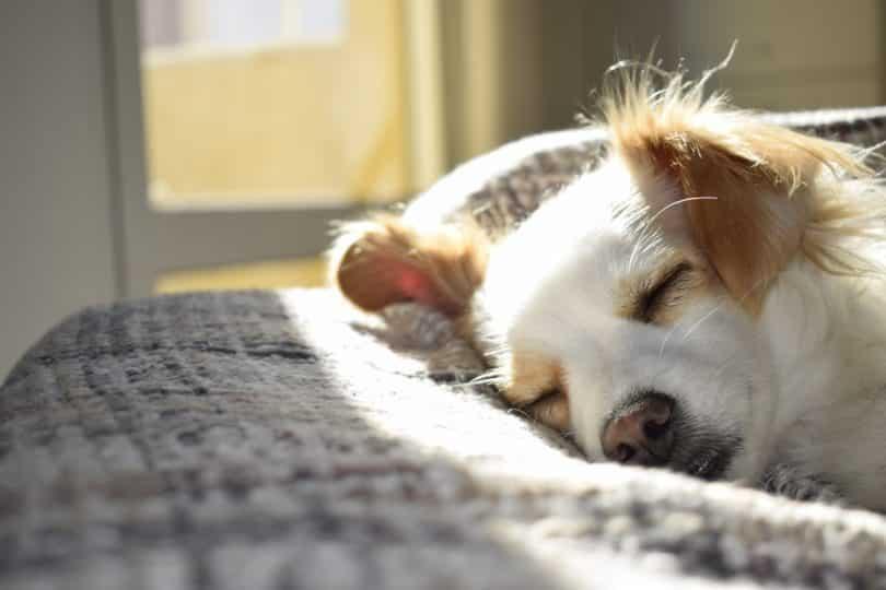 Cachorro deitado em uma cama