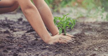 Criança plantando em jardim