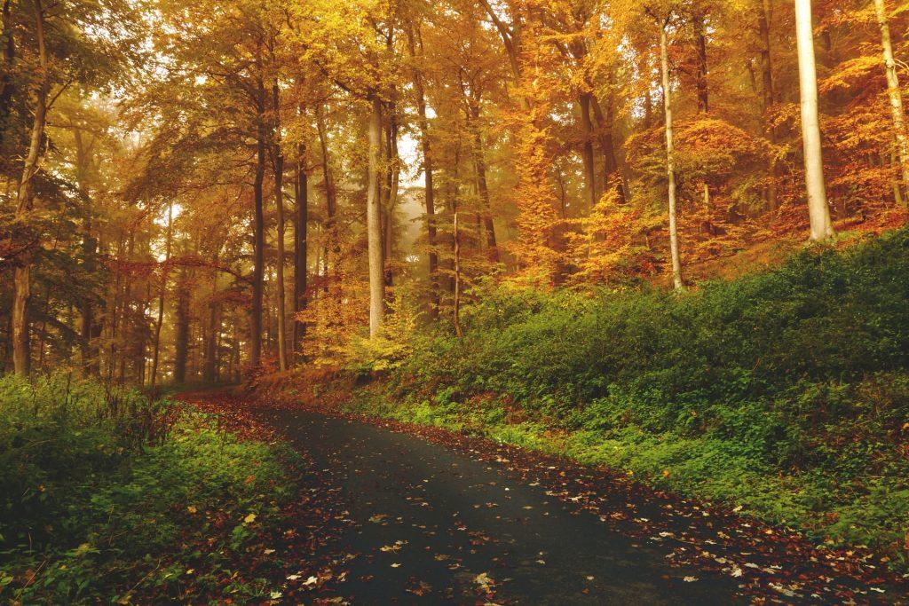 Estrada numa floresta.